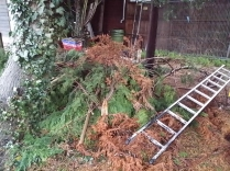 trees taken down