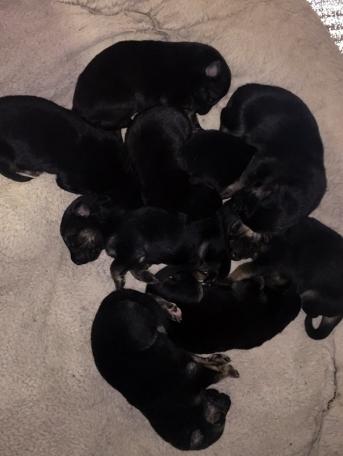 pups6