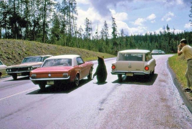 yogi&cars